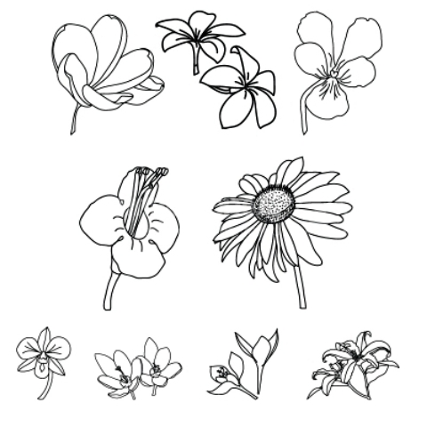 480x480 Different Types Of Flowers Drawn