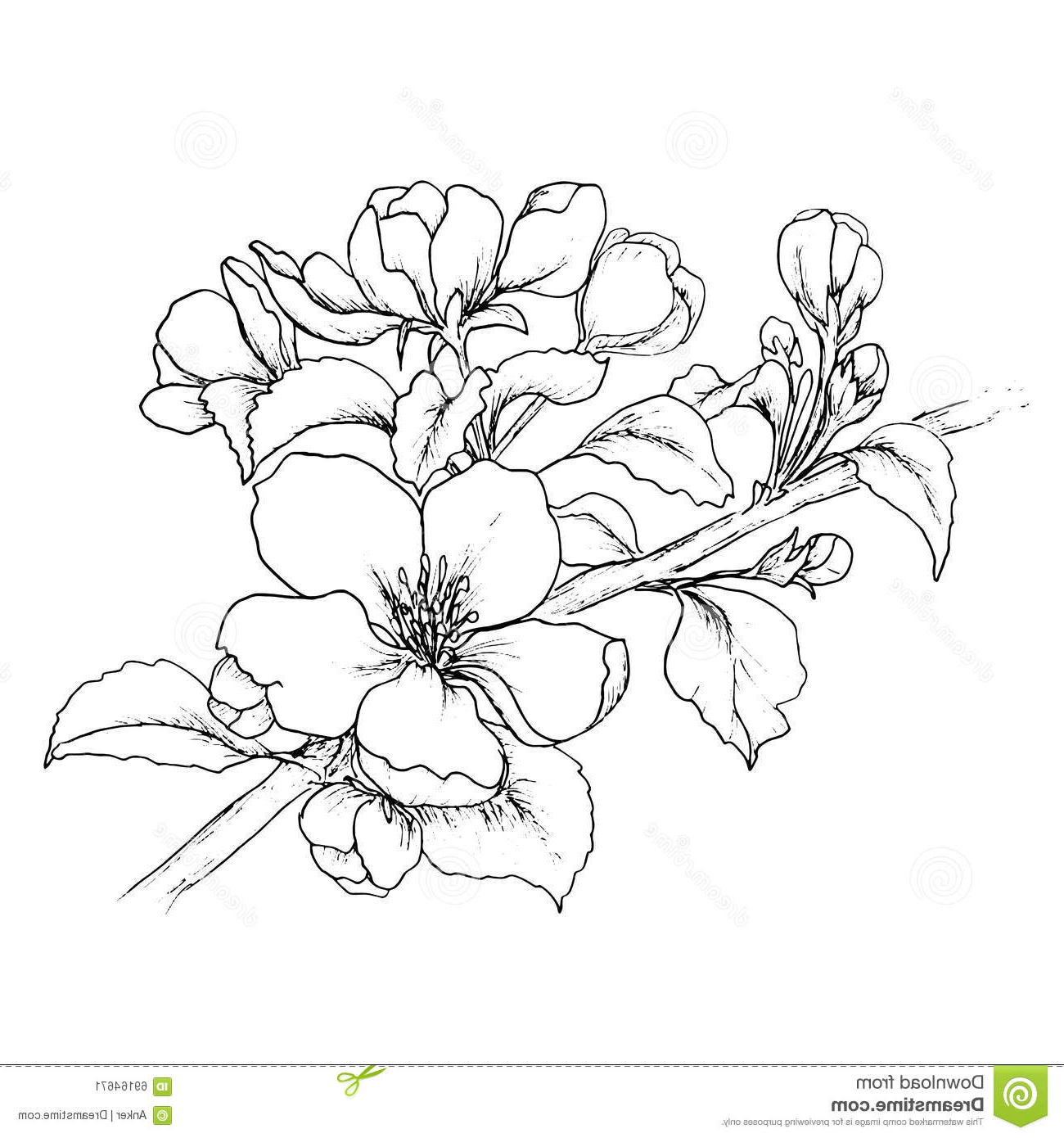 1300x1390 Cherry Blossom Flower Branch Drawing Cherry Branch In Blossom