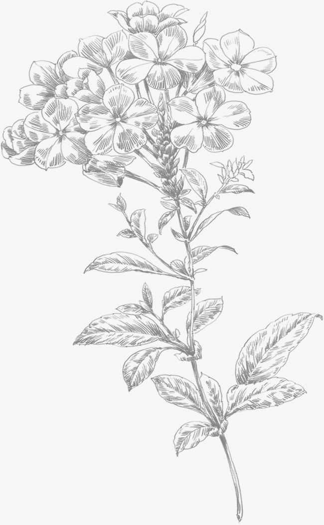 650x1051 Line Drawing Small Flowers, Hand Painted, Little Flower, Line