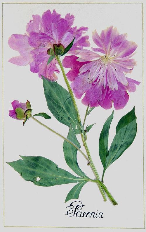 500x793 Dried Flower Collage Art By Lyudmila Solod (5)