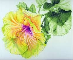 Flower Colour Pencil Drawing