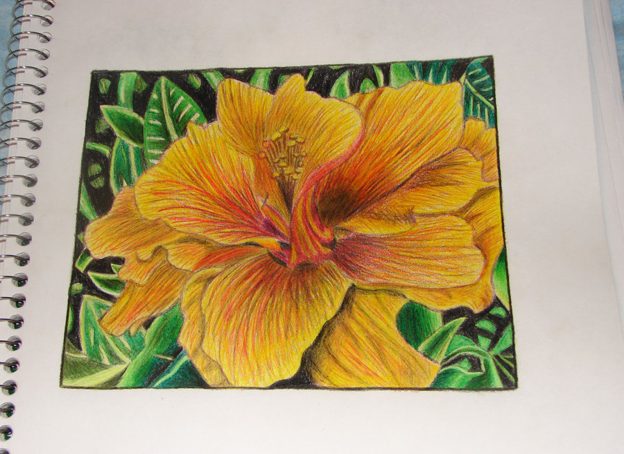 900x654 Flower Colored Pencil Practice By Yobanda