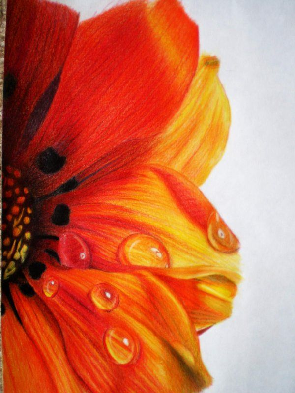 600x800 Flowers In Colored Pencil