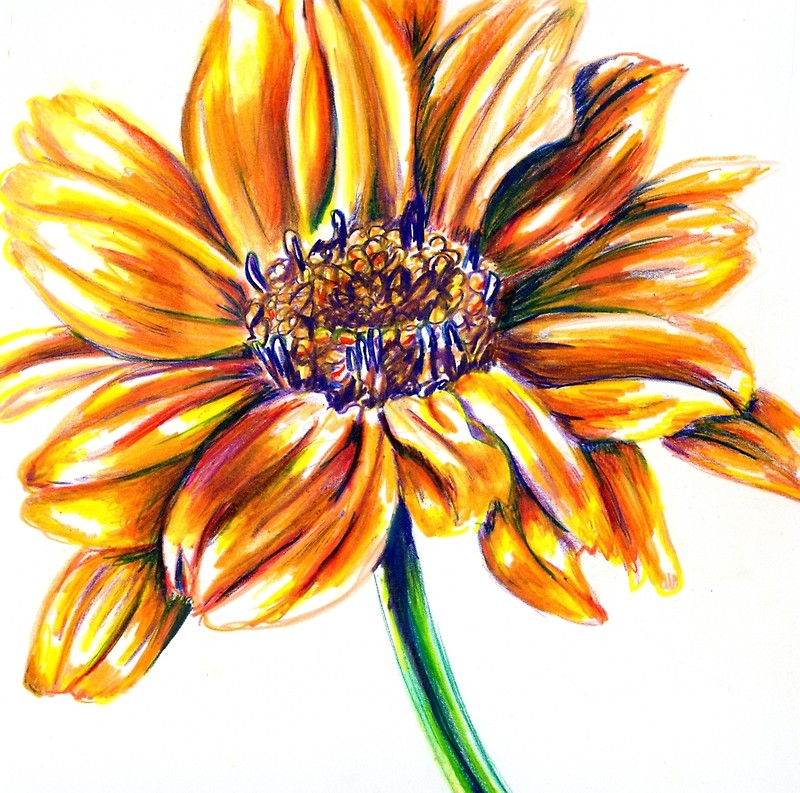 800x793 Yellow Flower Colored Pencil Drawing Photographic Prints By