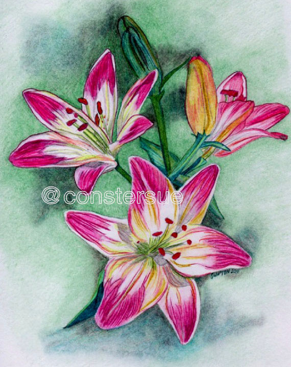 570x719 35 Beautiful Flower Drawings And Realistic Color Pencil Drawings