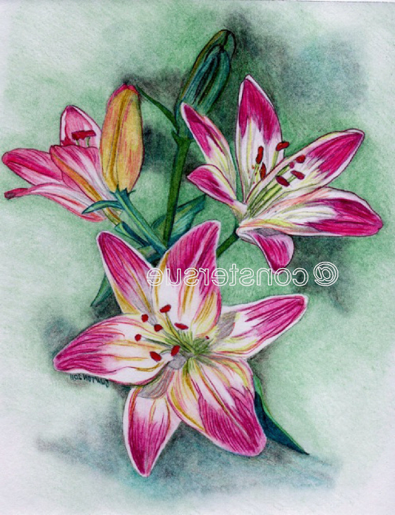 786x1024 Colour Pencil Drawing Of Flowers Colored Pencil Flowers Youtube