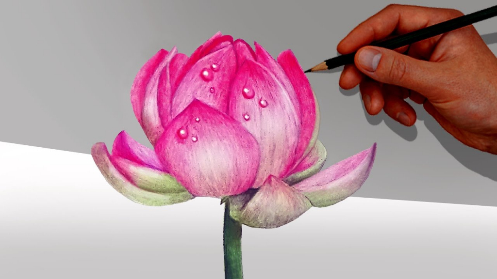 1024x576 Colour Pencil Drawing Of Flowers A Lotus Flower With