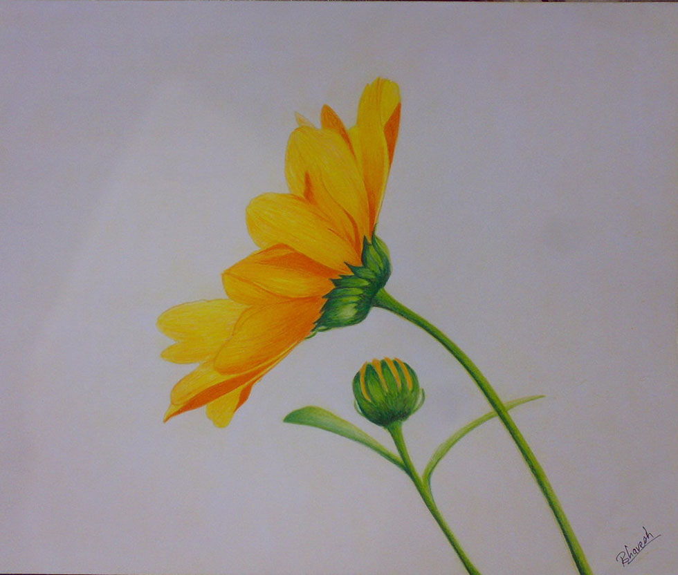 980x832 Easy Colored Pencil Drawings Of Flowers 25 Beautiful And Stunning