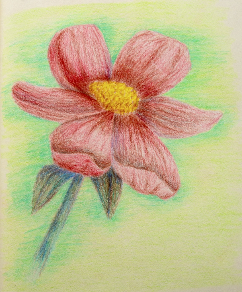 850x1024 Flower Colored Pencil Easy Colour Pencil Drawings Of Flowers