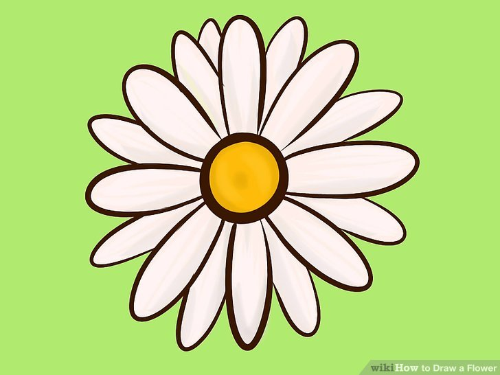 Flower Daisy Drawing