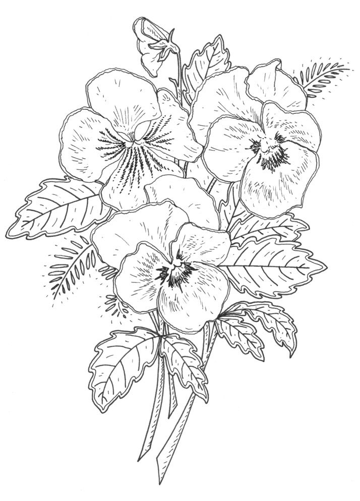Flower Designs Drawing