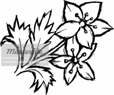 Flower drawing black and white at getdrawings free for 450x376 black and white pictures of flowers to draw black and white flower mightylinksfo Gallery