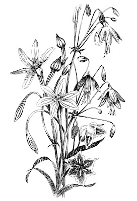 Flower drawing black and white at getdrawings free for 272x400 flowers archives 272x400 flowers archives 450x470 gallery black and white flower drawings mightylinksfo