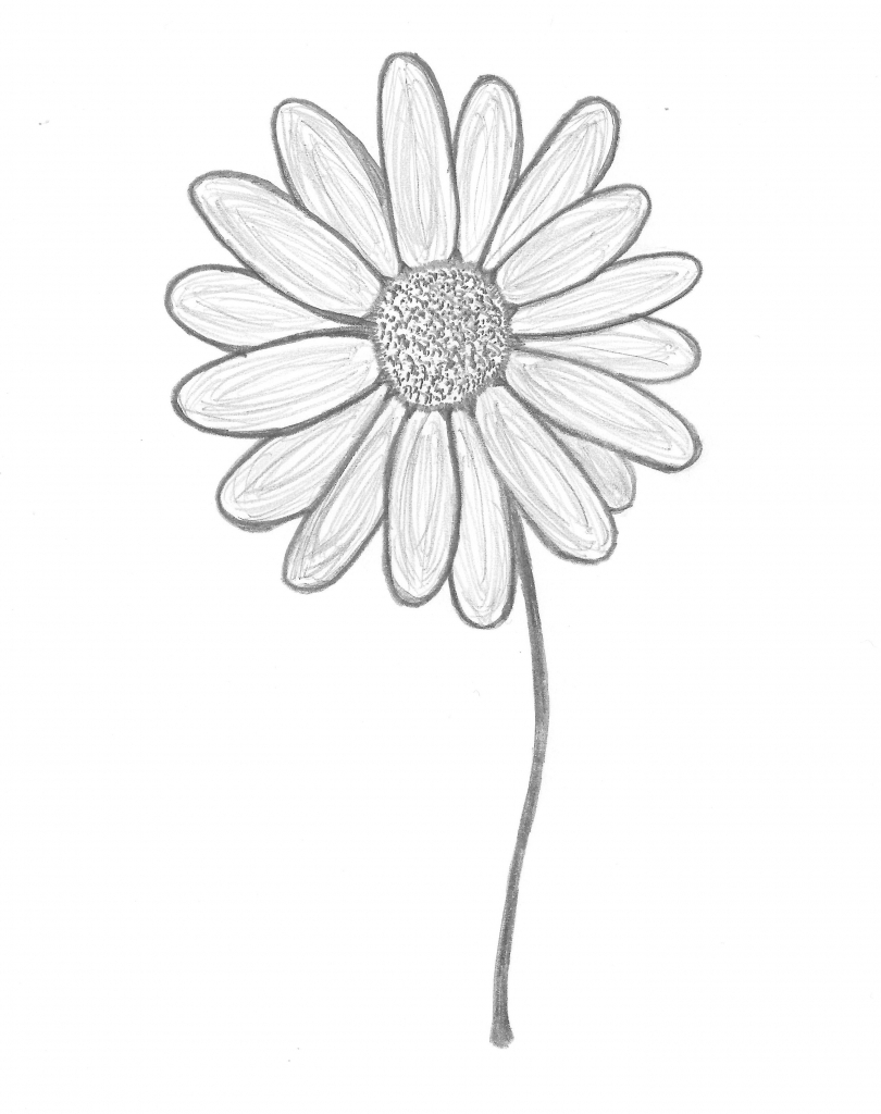810x1024 Daisy Flower Drawing Daisy Flower Drawing Daisy Hand Drawn Clipart