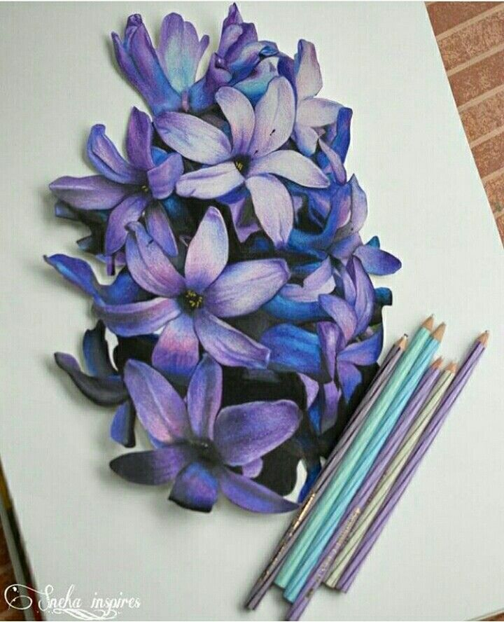 Flower Drawing Color
