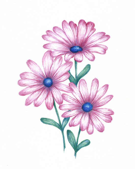 550x688 flowers for gt daisy flower drawings with color painting