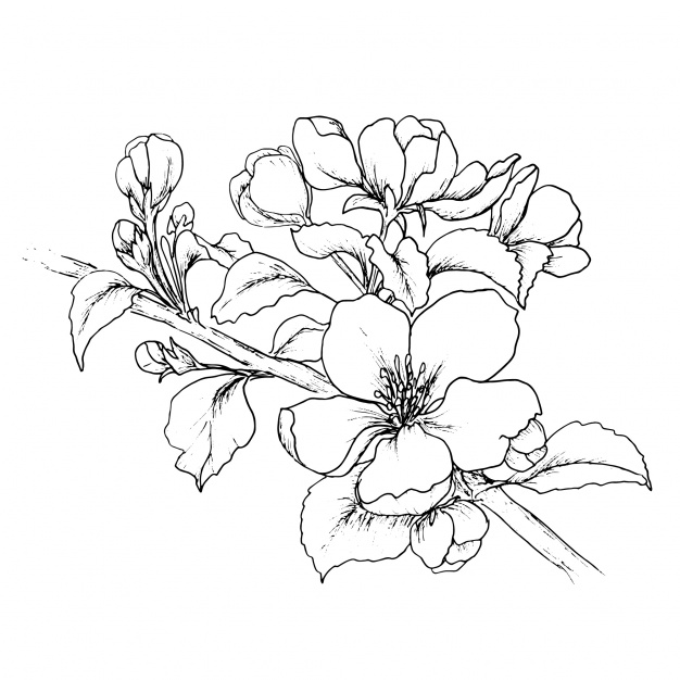 Beautiful Flower Line Drawing : Flower drawing outline at getdrawings free for