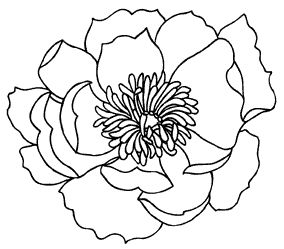 284x249 Gallery Outline Of A Flower,