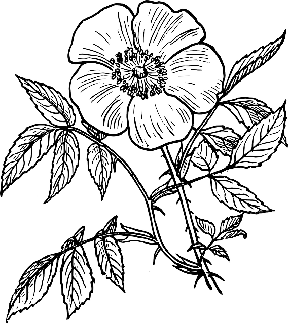 568x640 Image