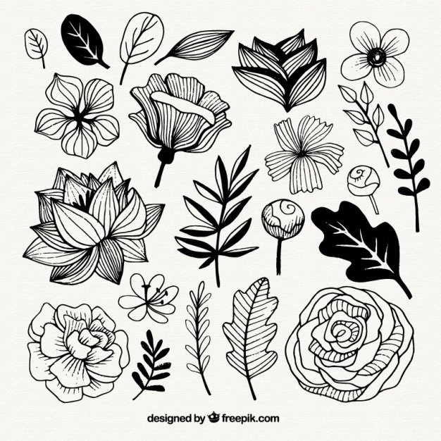 626x626 Flower Sketch Vectors, Photos And Psd Files Free Download