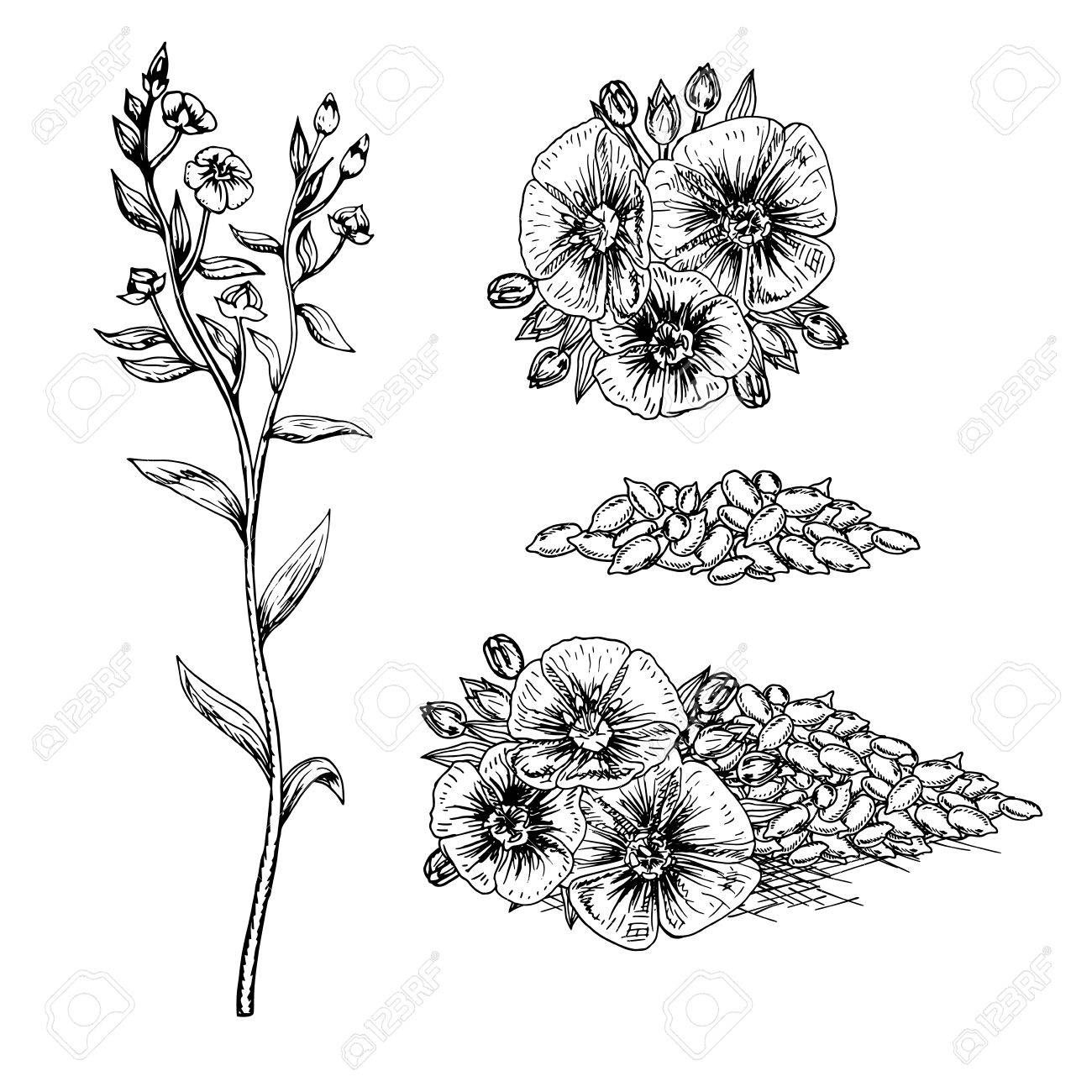 1300x1300 Hand Drawn Flax Flowers And Seeds. Pattern In Vintage Style