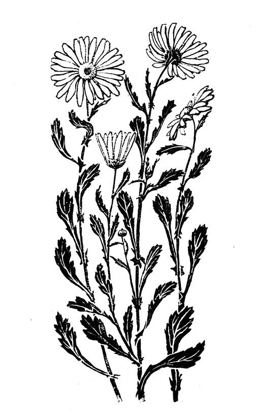504x827 Flower Sketches