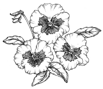 400x347 How To Draw A Pansy Howstuffworks