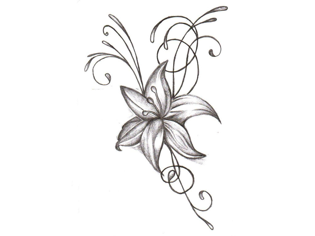 1024x768 Drawing Small Flowers Small Flower Drawing 1000 Images About