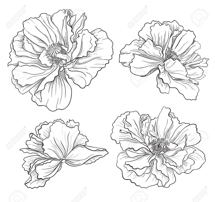 736x692 Image Result For Black And White Flower Sketch The Shop Misc