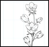 200x194 How To Draw Flowers Drawing Tutorials Amp Drawing Amp How To Draw