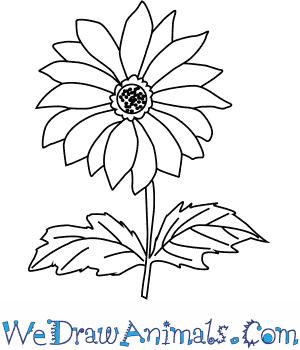 300x350 How To Draw A Chrysanthemum Flower