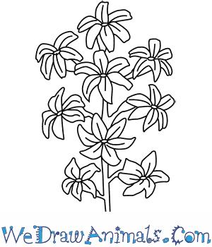 300x350 How To Draw A Hyacinth Flower