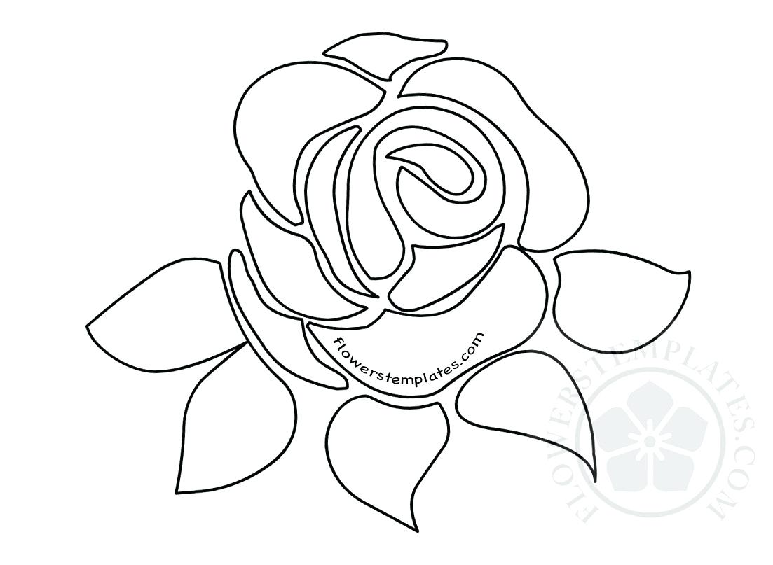 Flower Drawing Template At Getdrawings Free For Personal Use