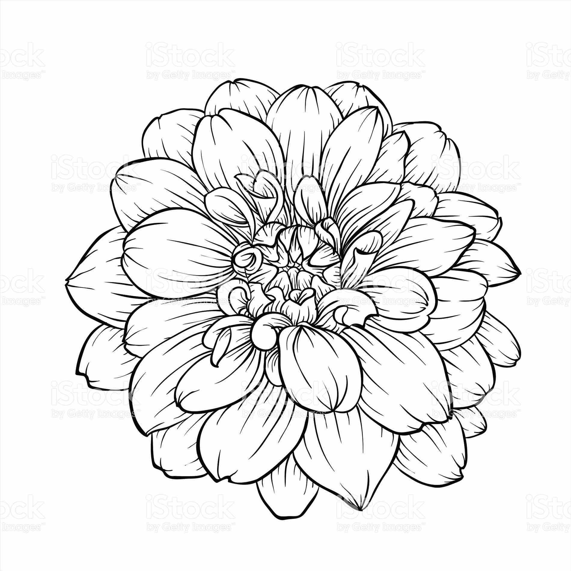 Flower drawing tumblr at getdrawings free for personal use 1900x1900 on dongetrabi rose bouquet tumblr dongetrabi black and white mightylinksfo