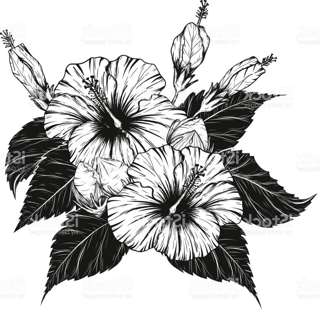 Hibiscus Tattoo Drawing: Flower Drawing Vector At GetDrawings