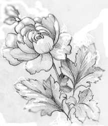 216x252 Learn To Draw Pencil Sketches Blog