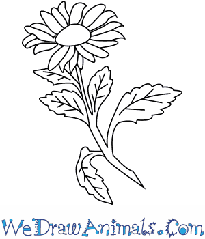 300x350 How To Draw An Aster Flower