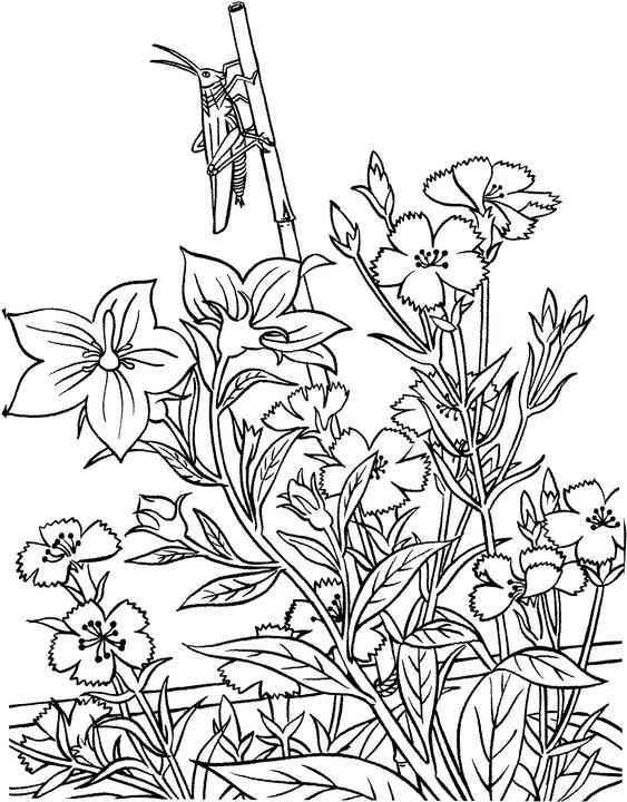 Flower Garden Drawing