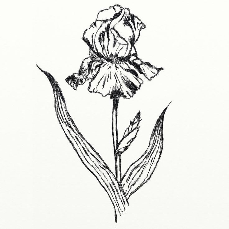 Flower Growing Drawing
