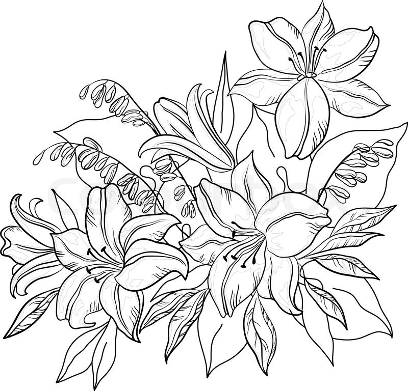 800x768 Flowers And Leaves Lily And Mine, Vector, Monochrome Contours