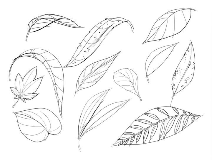 720x545 Lesson 3 Drawing Plants