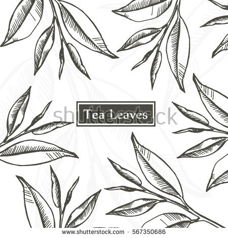 450x470 Tea Leaves Linear Drawing Graphic Design Vintage