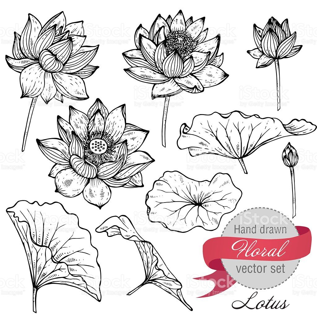 1024x1022 Vector Set Of Hand Drawn Lotus Flowers And Leaves. Sketch Floral