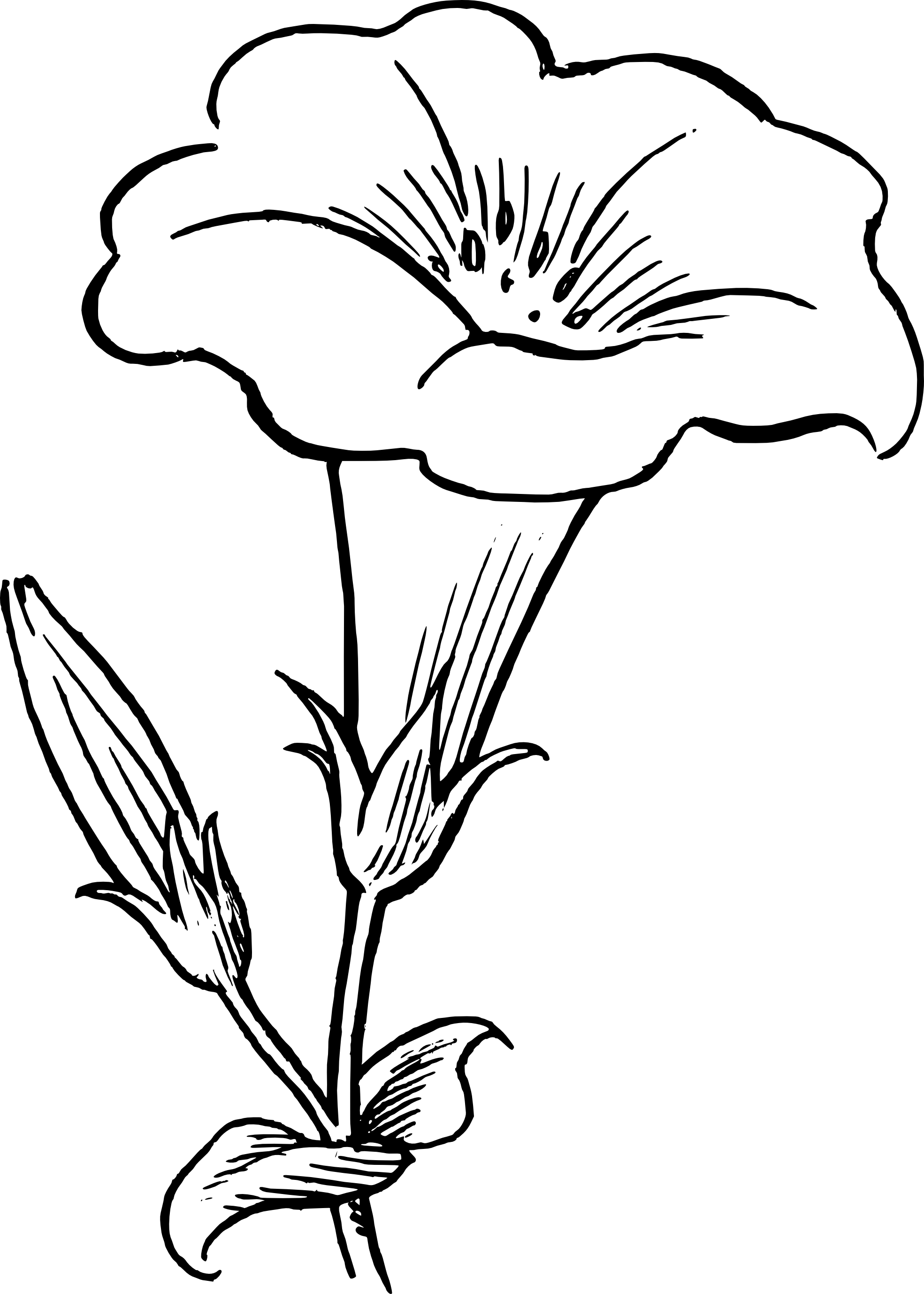 Flower Line Drawing Clip Art Free