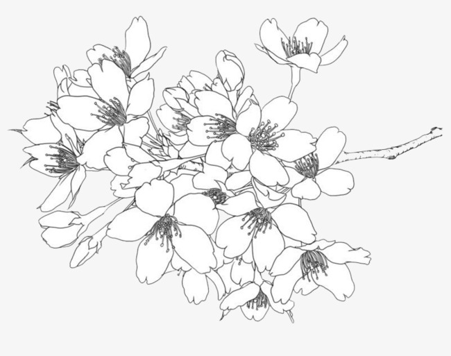650x513 line drawing flowers line drawing mellow flowers png image and