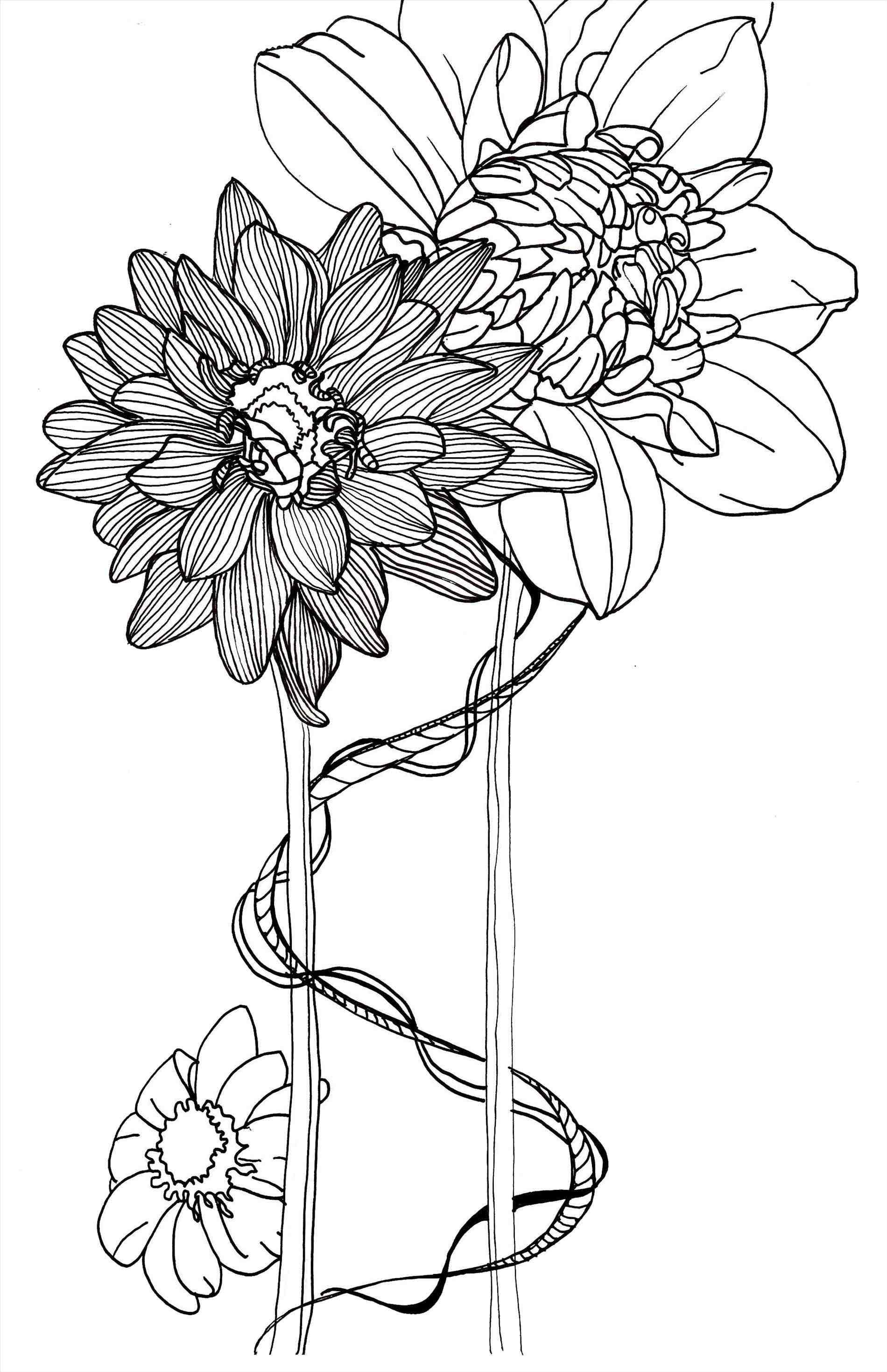 1900x2938 Flower Line Drawings