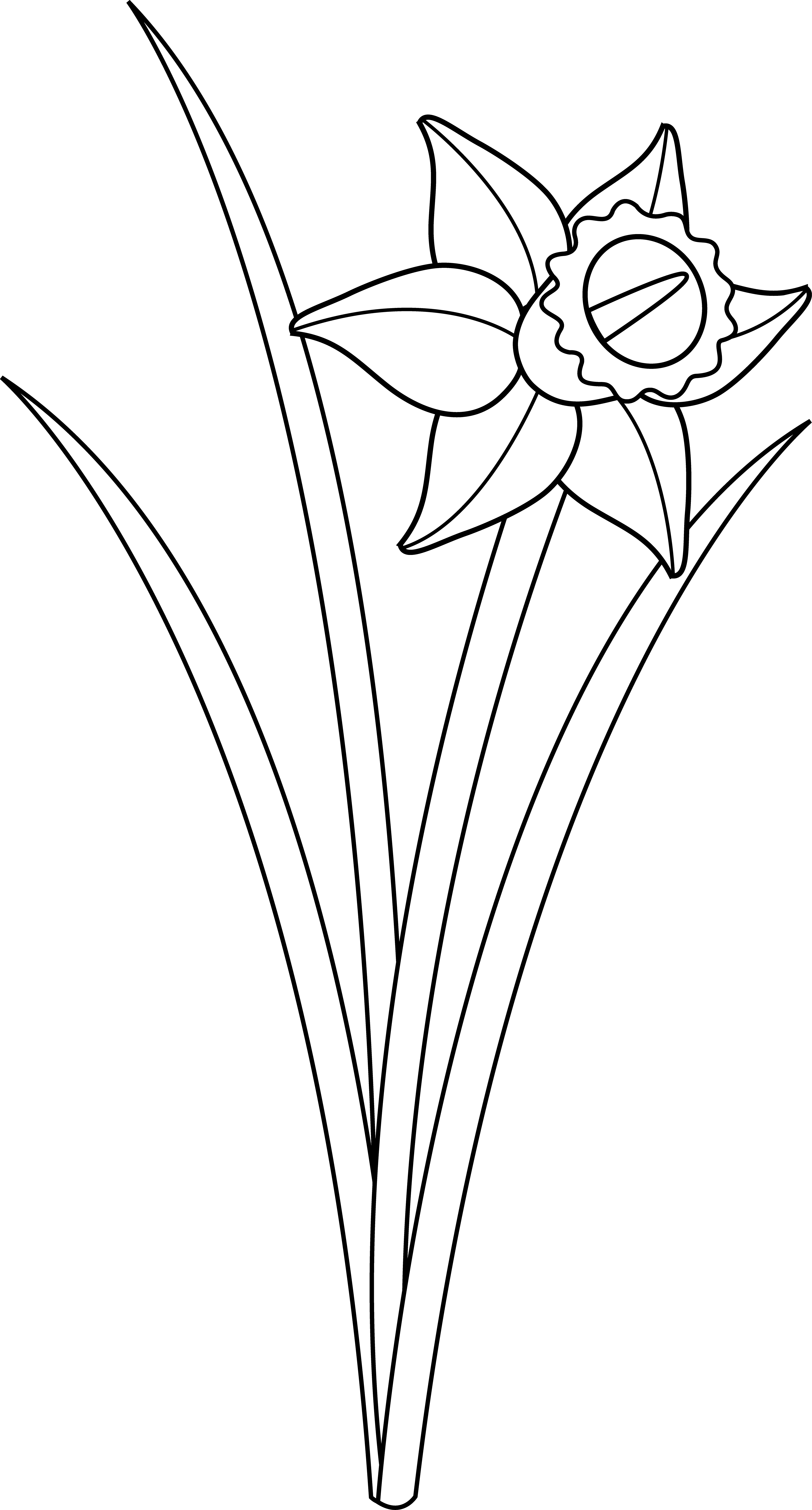 Flower Line Drawing Clip Art Free At Getdrawings Free For