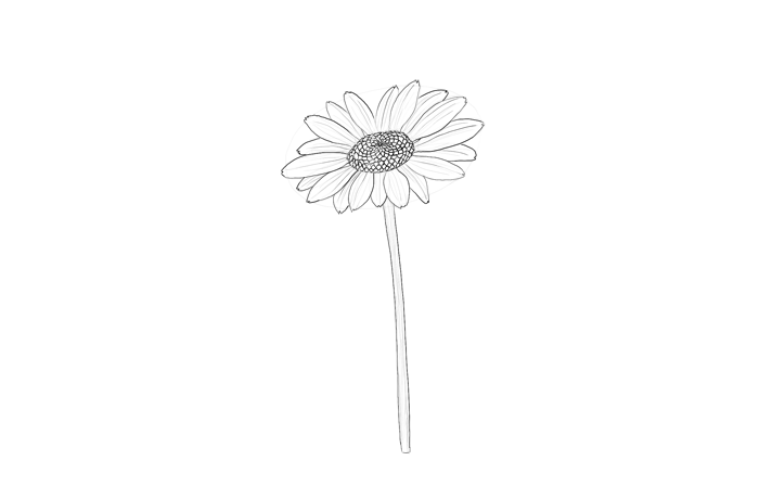 700x448 How To Draw Flowers The Innocent And Cheerful Daisy