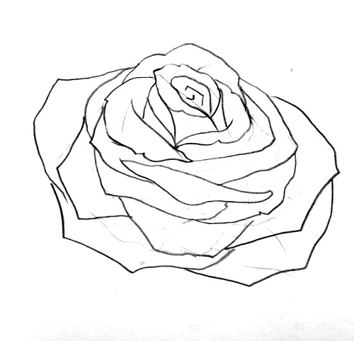 500x482 How To Draw A Rose