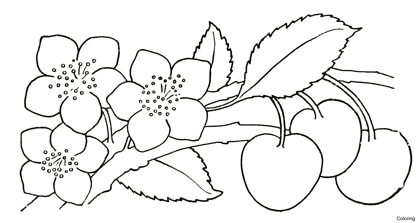 Flower Pictures Drawing